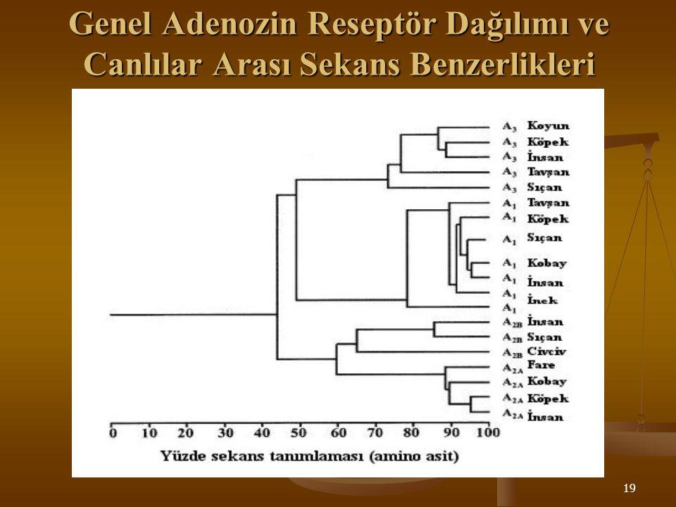 19 Genel Adenozin Reseptör Dağılımı ve Canlılar Arası Sekans Benzerlikleri