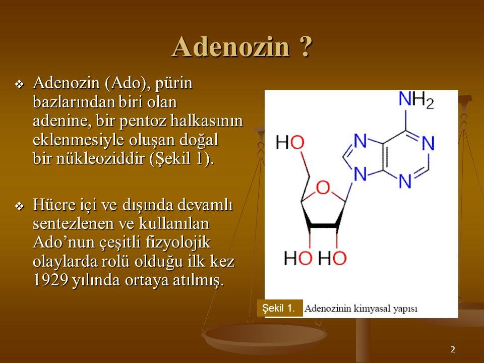 2 Adenozin ?  Adenozin (Ado), pürin bazlarından biri olan adenine, bir pentoz halkasının eklenmesiyle oluşan doğal bir nükleoziddir (Şekil 1).  Hücr