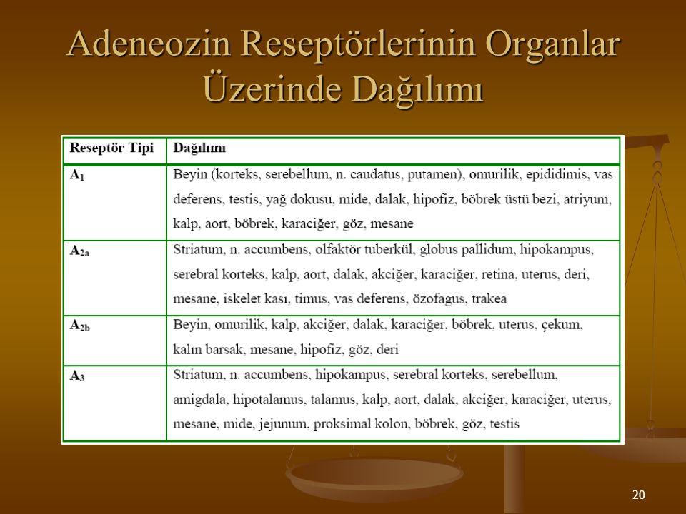 20 Adeneozin Reseptörlerinin Organlar Üzerinde Dağılımı