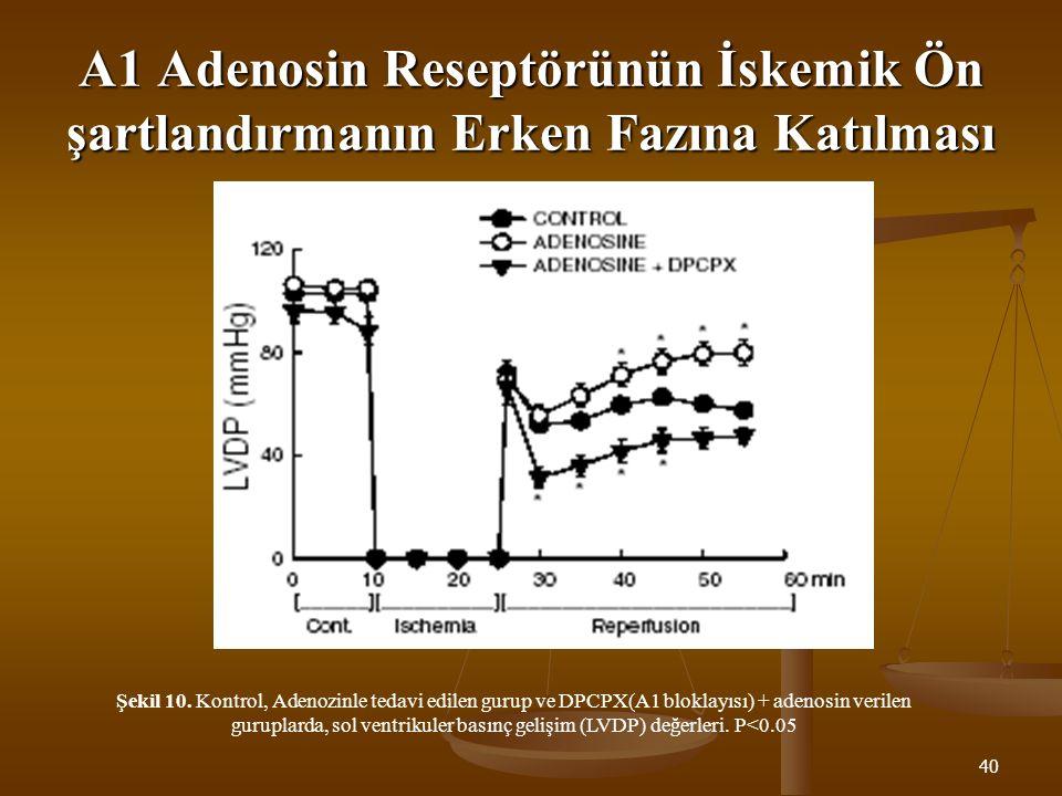 40 A1 Adenosin Reseptörünün İskemik Ön şartlandırmanın Erken Fazına Katılması Şekil 10. Kontrol, Adenozinle tedavi edilen gurup ve DPCPX(A1 bloklayısı