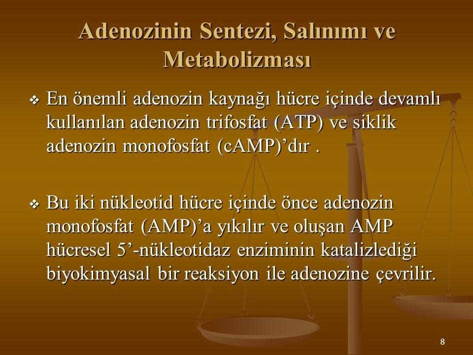 8 Adenozinin Sentezi, Salınımı ve Metabolizması  En önemli adenozin kaynağı hücre içinde devamlı kullanılan adenozin trifosfat (ATP) ve siklik adenoz