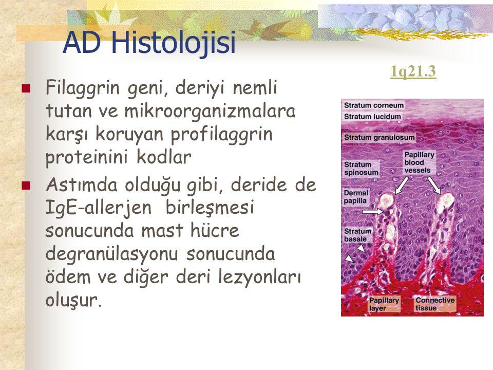 AD Histolojisi Filaggrin geni, deriyi nemli tutan ve mikroorganizmalara karşı koruyan profilaggrin proteinini kodlar Astımda olduğu gibi, deride de IgE-allerjen birleşmesi sonucunda mast hücre degranülasyonu sonucunda ödem ve diğer deri lezyonları oluşur.