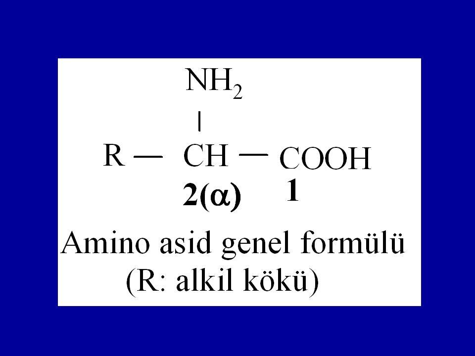 Amino asidlerde numaralandırma 1.