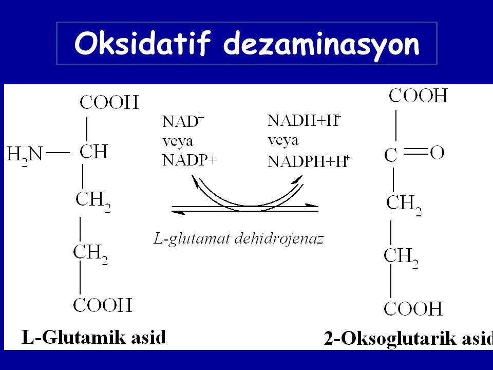Oksidatif dezaminasyon