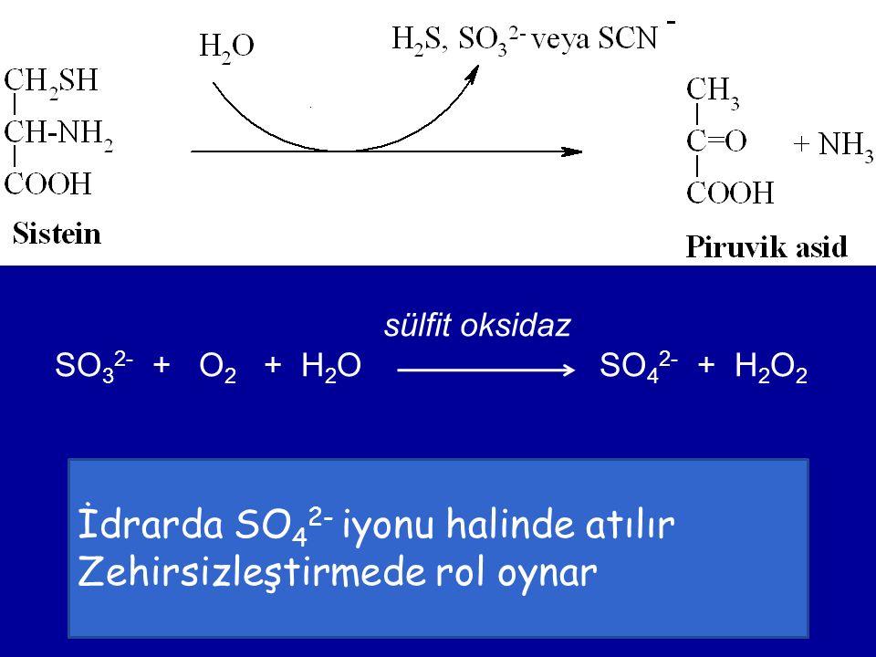 sülfit oksidaz SO 3 2- + O 2 + H 2 O SO 4 2- + H 2 O 2 İdrarda SO 4 2- iyonu halinde atılır Zehirsizleştirmede rol oynar