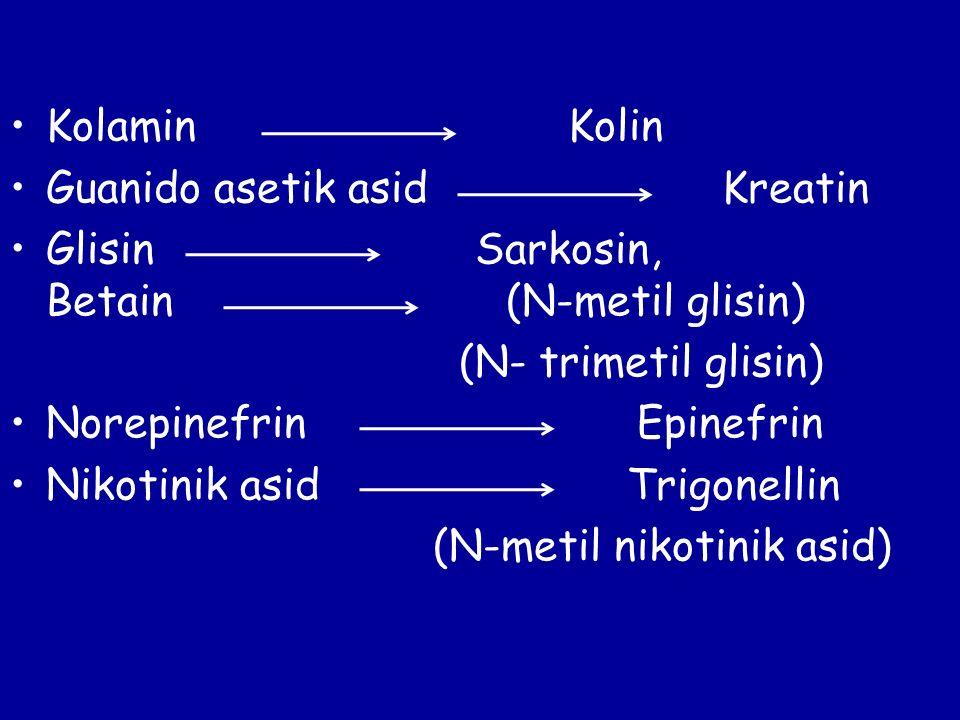 Kolamin Kolin Guanido asetik asid Kreatin Glisin Sarkosin, Betain (N-metil glisin) (N- trimetil glisin) Norepinefrin Epinefrin Nikotinik asid Trigonel