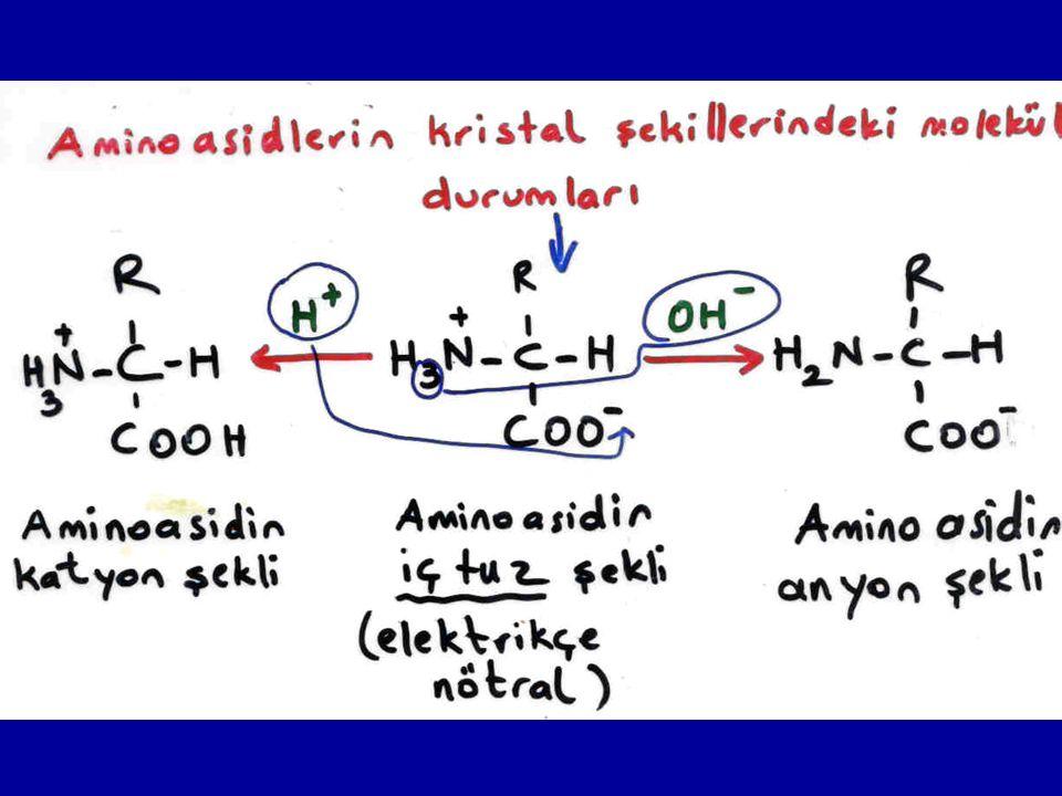 İzoelektrik nokta (İ.P.) Amino asidlerin iç tuz halinde bulundukları yani elektrikçe nötral oldukları pH'a izoelektrik nokta denir.