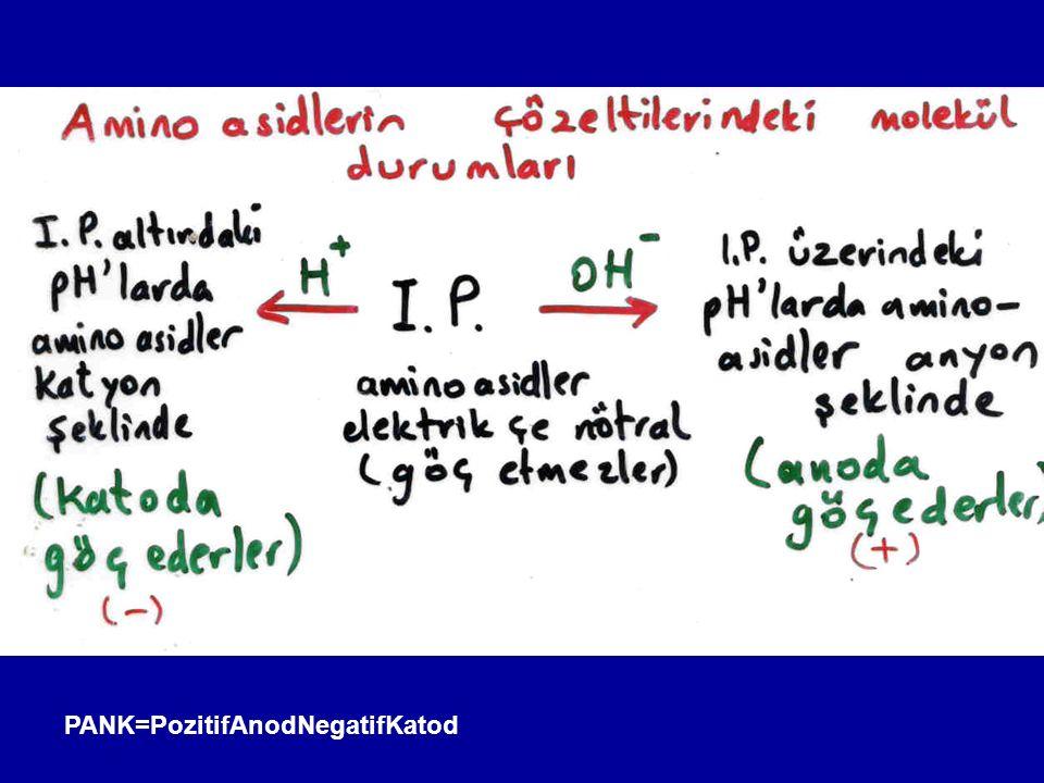 Glutamik asid (2-aminoglutarik asid) Endojen