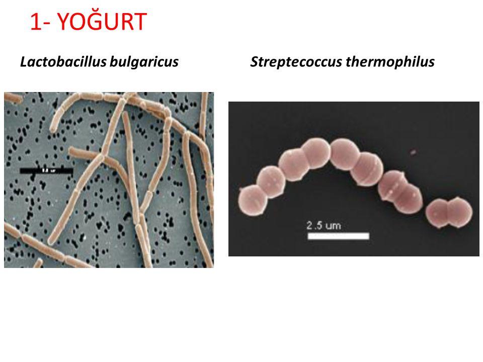 1- YOĞURT Stirred tip yoğurt üretim hattı