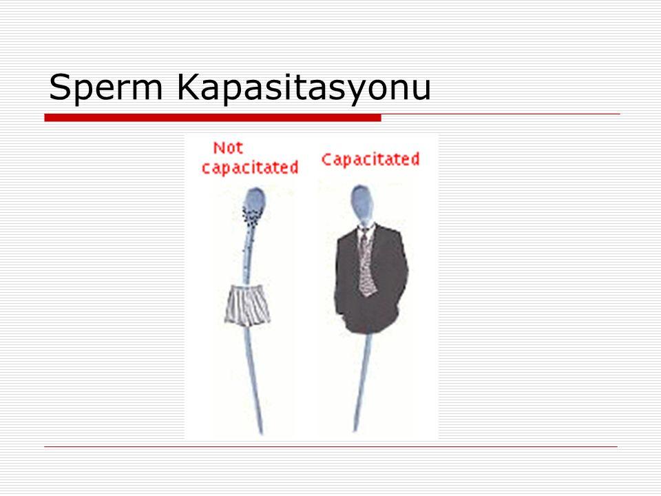 Sperm Kapasitasyonu