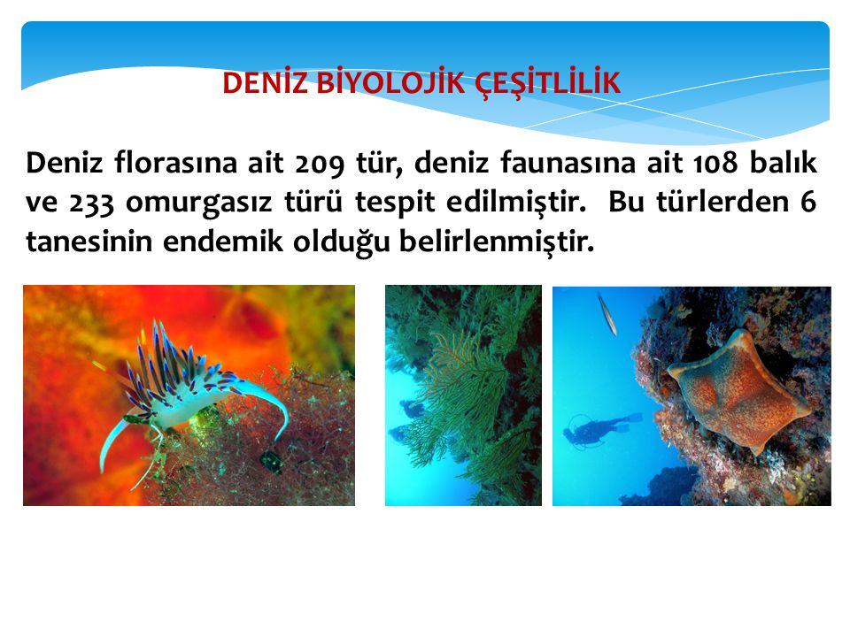DENİZ BİYOLOJİK ÇEŞİTLİLİK Deniz florasına ait 209 tür, deniz faunasına ait 108 balık ve 233 omurgasız türü tespit edilmiştir. Bu türlerden 6 tanesini