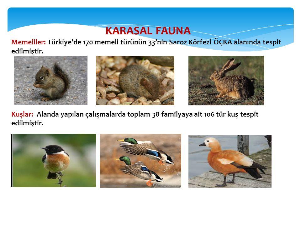 KARASAL FAUNA Memeliler: Türkiye'de 170 memeli türünün 33'nin Saroz Körfezi ÖÇKA alanında tespit edilmiştir. Kuşlar: Alanda yapılan çalışmalarda topla