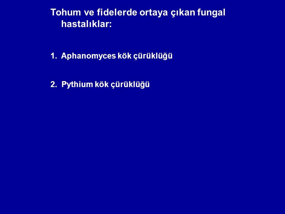 Tohum ve fidelerde ortaya çıkan fungal hastalıklar: 1.Aphanomyces kök çürüklüğü 2. Pythium kök çürüklüğü
