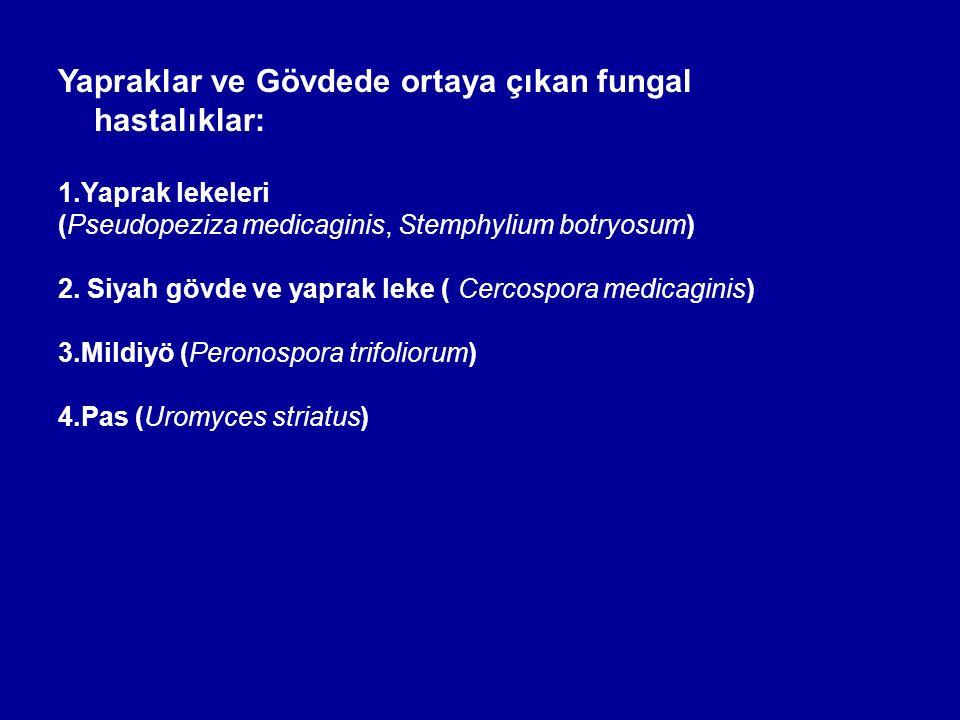 Yapraklar ve Gövdede ortaya çıkan fungal hastalıklar: 1.Yaprak lekeleri (Pseudopeziza medicaginis, Stemphylium botryosum) 2. Siyah gövde ve yaprak lek