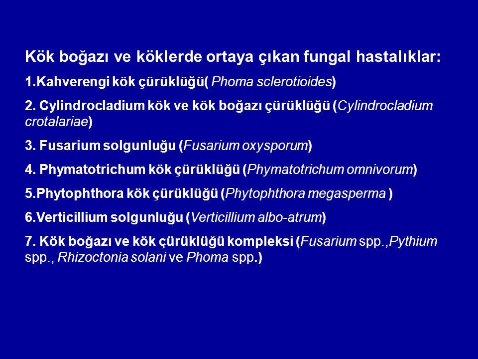 Kök boğazı ve köklerde ortaya çıkan fungal hastalıklar: 1.Kahverengi kök çürüklüğü( Phoma sclerotioides) 2. Cylindrocladium kök ve kök boğazı çürüklüğ