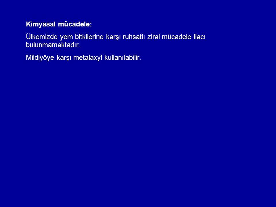 Yaprak lekesi (Stemphylium botryosum)