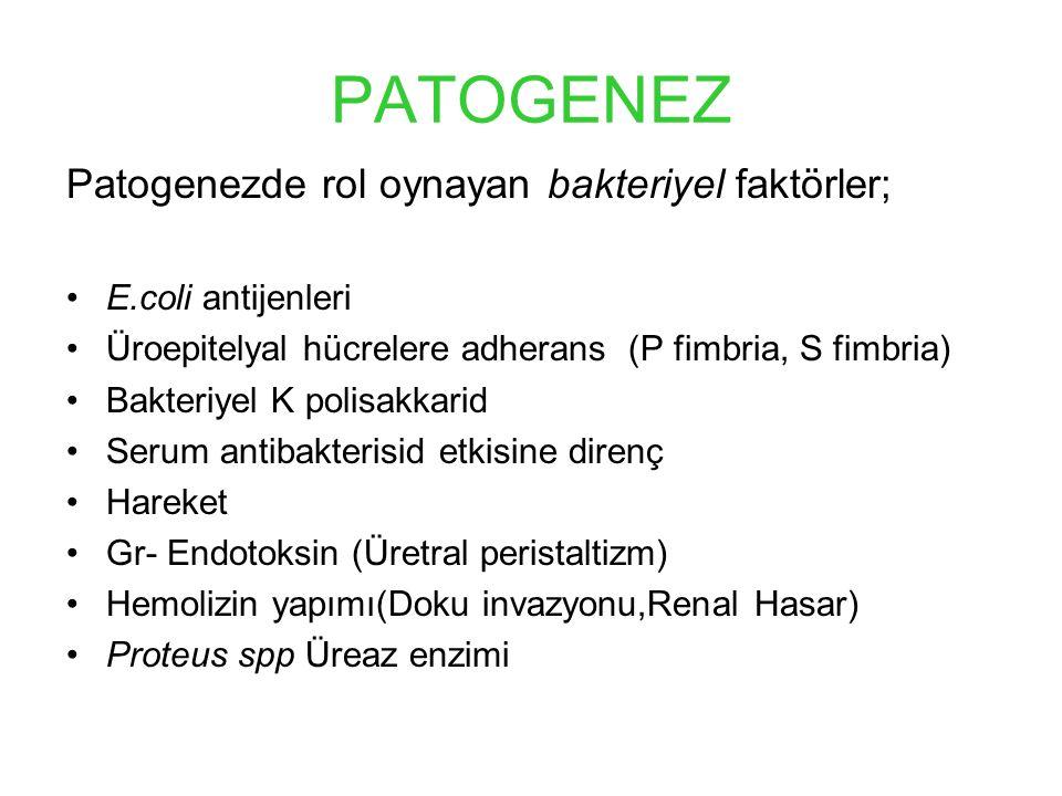 PATOGENEZ Patogenezde rol oynayan bakteriyel faktörler; E.coli antijenleri Üroepitelyal hücrelere adherans (P fimbria, S fimbria) Bakteriyel K polisakkarid Serum antibakterisid etkisine direnç Hareket Gr- Endotoksin (Üretral peristaltizm) Hemolizin yapımı(Doku invazyonu,Renal Hasar) Proteus spp Üreaz enzimi