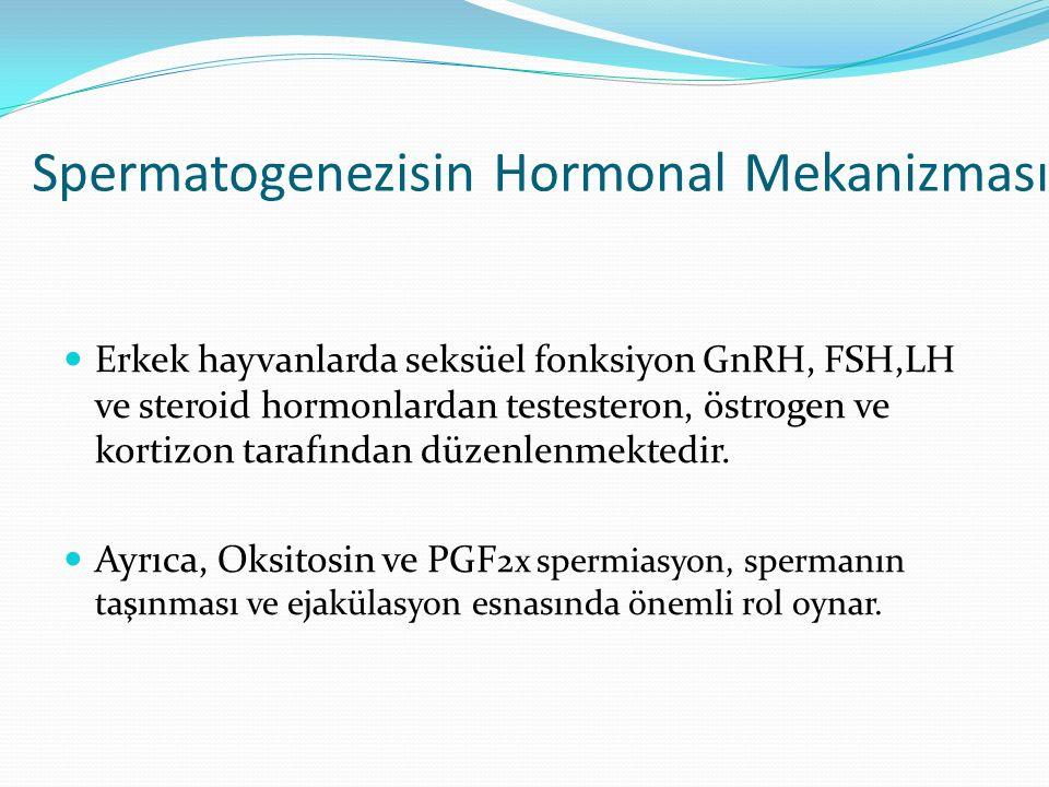 Spermatogenezisin Hormonal Mekanizması Erkek hayvanlarda seksüel fonksiyon GnRH, FSH,LH ve steroid hormonlardan testesteron, östrogen ve kortizon tarafından düzenlenmektedir.