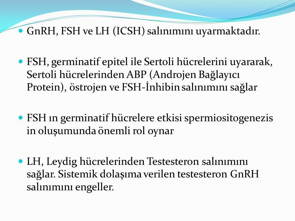 GnRH, FSH ve LH (ICSH) salınımını uyarmaktadır.