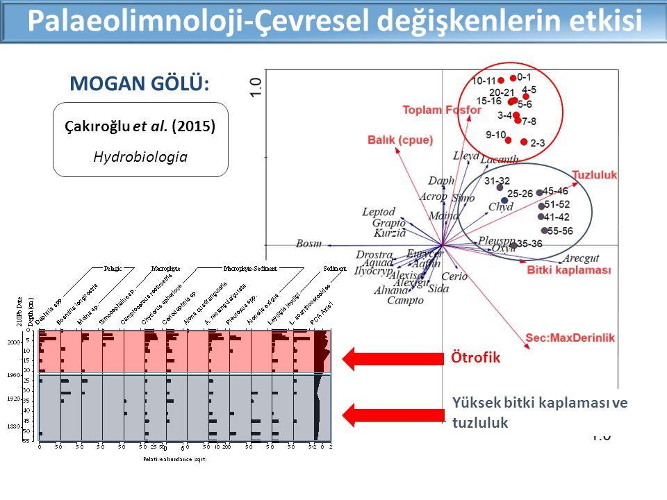 Palaeolimnoloji-Çevresel değişkenlerin etkisi MOGAN GÖLÜ: Yüksek bitki kaplaması ve tuzluluk Ötrofik Çakıroğlu et al. (2015) Hydrobiologia