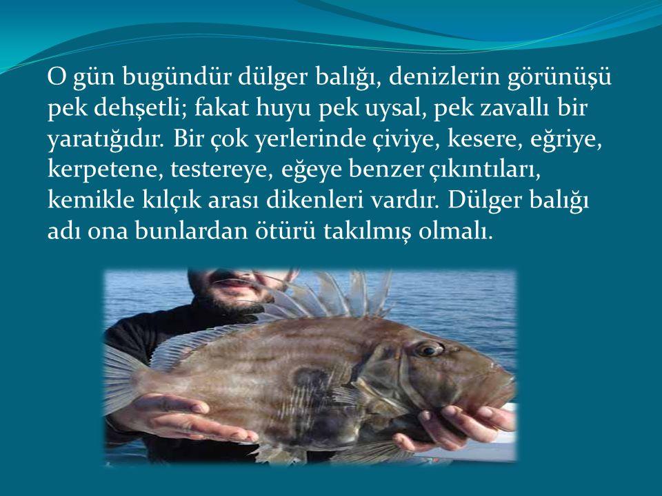 O gün bugündür dülger balığı, denizlerin görünüşü pek dehşetli; fakat huyu pek uysal, pek zavallı bir yaratığıdır.