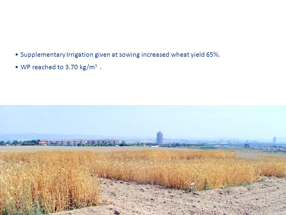 Supplementary Irrigation given at sowing increased wheat yield 65%. WP reached to 3.70 kg/m 3.