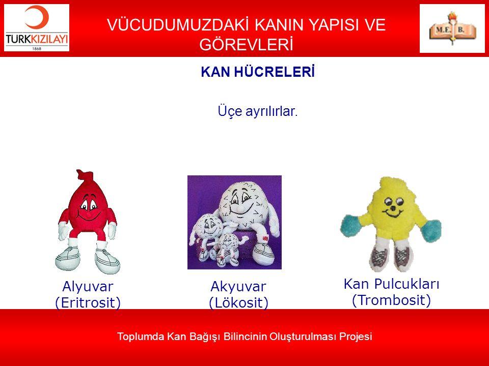 Toplumda Kan Bağışı Bilincinin Oluşturulması Projesi VÜCUDUMUZDAKİ KANIN YAPISI VE GÖREVLERİ Alyuvar (Eritrosit) Akyuvar (Lökosit) Kan Pulcukları (Tro