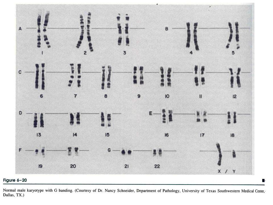 genetik hastalıklar 20062
