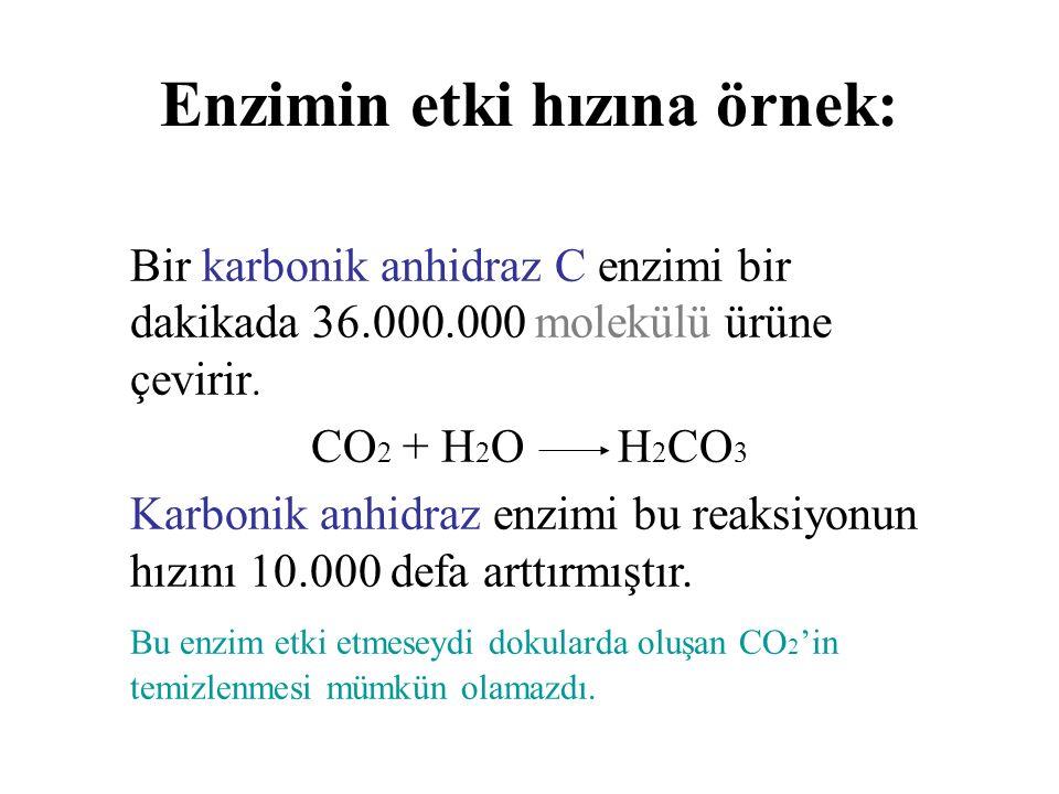Enzimin etki hızına örnek: Bir karbonik anhidraz C enzimi bir dakikada 36.000.000 molekülü ürüne çevirir. CO 2 + H 2 O H 2 CO 3 Karbonik anhidraz enzi