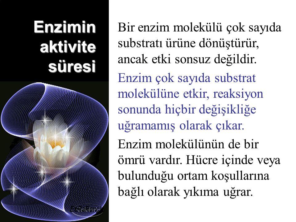 Bir enzim molekülü çok sayıda substratı ürüne dönüştürür, ancak etki sonsuz değildir.
