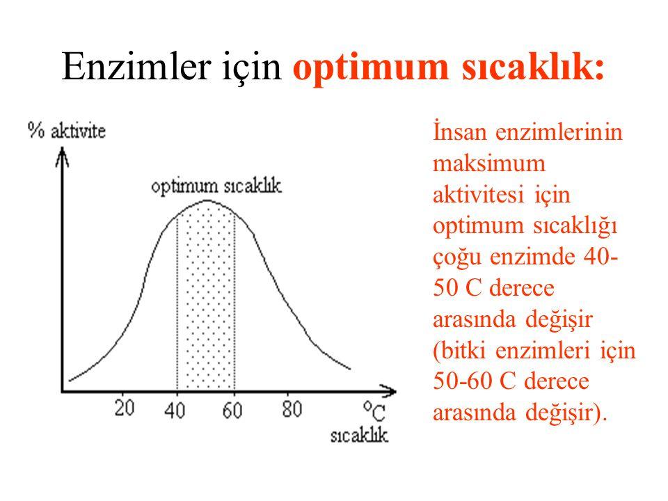 Enzimler için optimum sıcaklık: İnsan enzimlerinin maksimum aktivitesi için optimum sıcaklığı çoğu enzimde 40- 50 C derece arasında değişir (bitki enzimleri için 50-60 C derece arasında değişir).