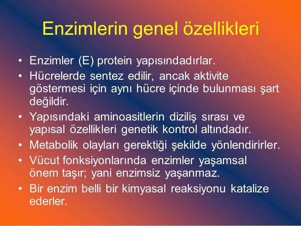 Enzimlerin genel özellikleri Enzimler (E) protein yapısındadırlar. Hücrelerde sentez edilir, ancak aktivite göstermesi için aynı hücre içinde bulunmas