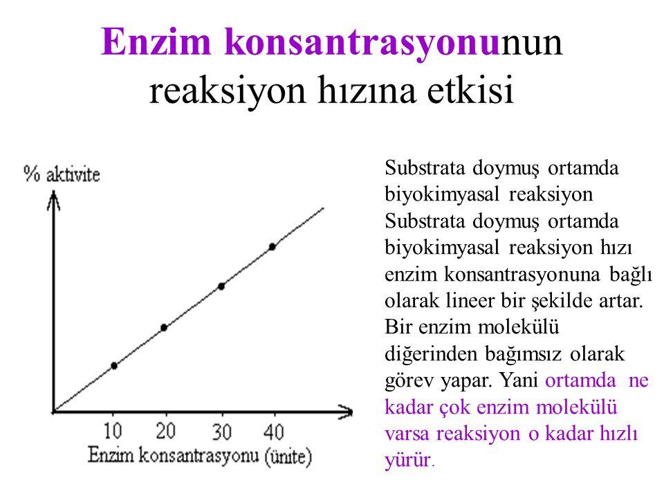 Enzim konsantrasyonunun reaksiyon hızına etkisi Substrata doymuş ortamda biyokimyasal reaksiyon Substrata doymuş ortamda biyokimyasal reaksiyon hızı enzim konsantrasyonuna bağlı olarak lineer bir şekilde artar.