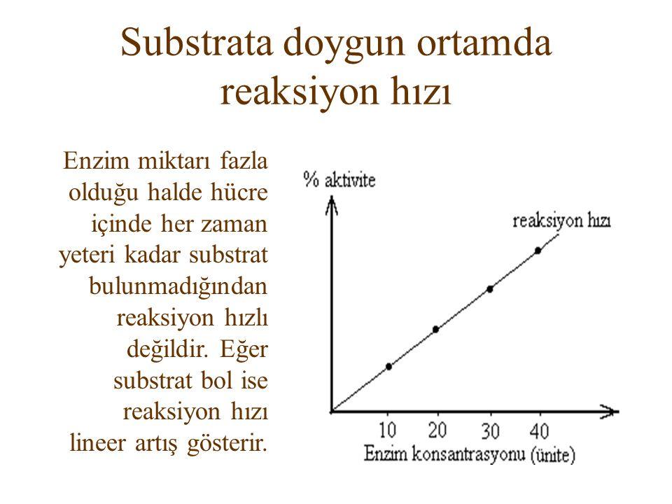 Substrata doygun ortamda reaksiyon hızı Enzim miktarı fazla olduğu halde hücre içinde her zaman yeteri kadar substrat bulunmadığından reaksiyon hızlı