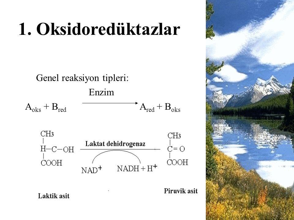 1. Oksidoredüktazlar Genel reaksiyon tipleri: Enzim A oks + B red A red + B oks