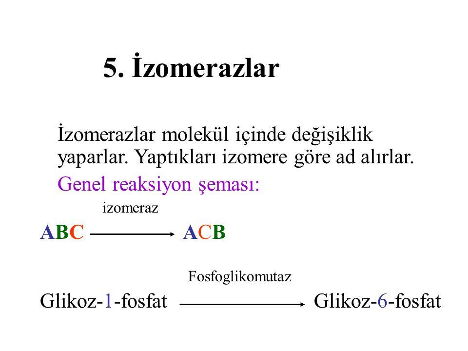 5.İzomerazlar İzomerazlar molekül içinde değişiklik yaparlar.