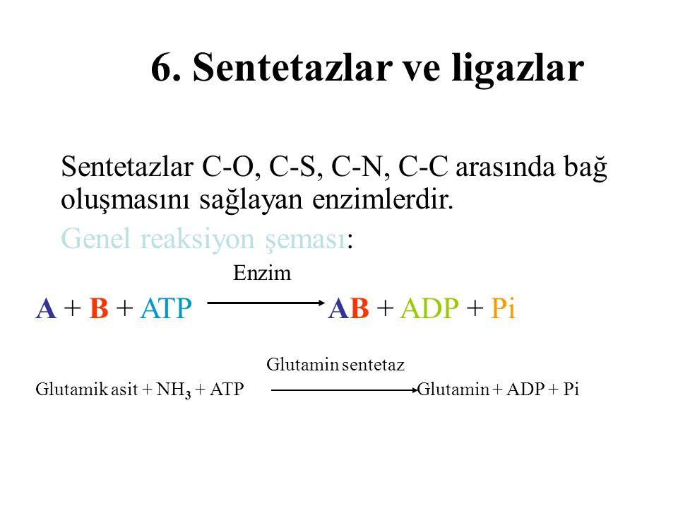 6. Sentetazlar ve ligazlar Sentetazlar C-O, C-S, C-N, C-C arasında bağ oluşmasını sağlayan enzimlerdir. Genel reaksiyon şeması: Enzim A + B + ATP AB +