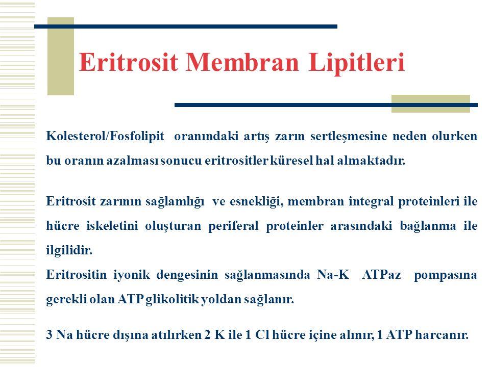 Eritrosit Membran Lipitleri Kolesterol/Fosfolipit oranındaki artış zarın sertleşmesine neden olurken bu oranın azalması sonucu eritrositler küresel hal almaktadır.