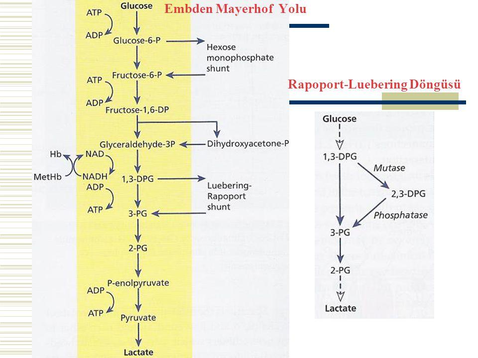 Rapoport-Luebering Döngüsü Embden Mayerhof Yolu