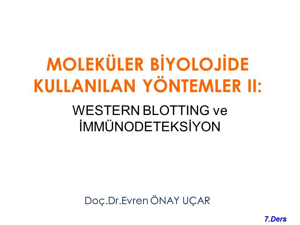 Western blotting: Western blotting: Akrilamit jeldeki protein bantlarının daha kararlı ve sabit bir ortama (örneğin, nitroselüloz kağıda) aktarılması.