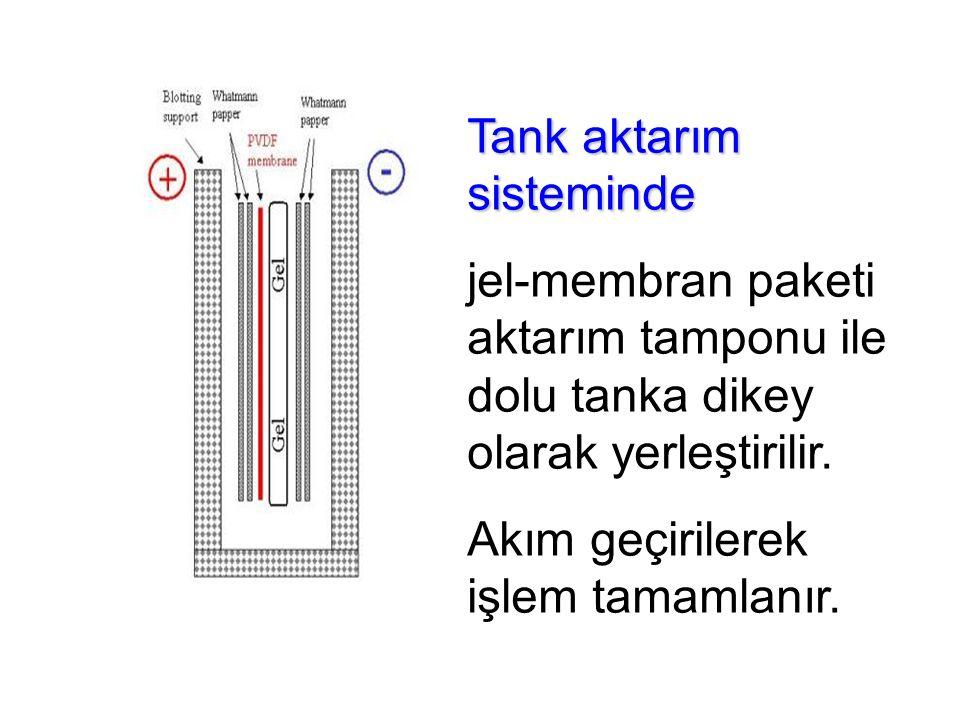 Tank aktarım sisteminde jel-membran paketi aktarım tamponu ile dolu tanka dikey olarak yerleştirilir.
