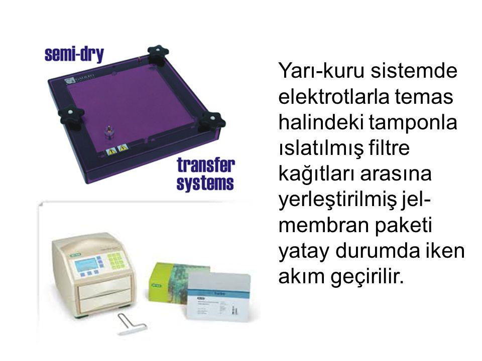 Yarı-kuru sistemde elektrotlarla temas halindeki tamponla ıslatılmış filtre kağıtları arasına yerleştirilmiş jel- membran paketi yatay durumda iken akım geçirilir.