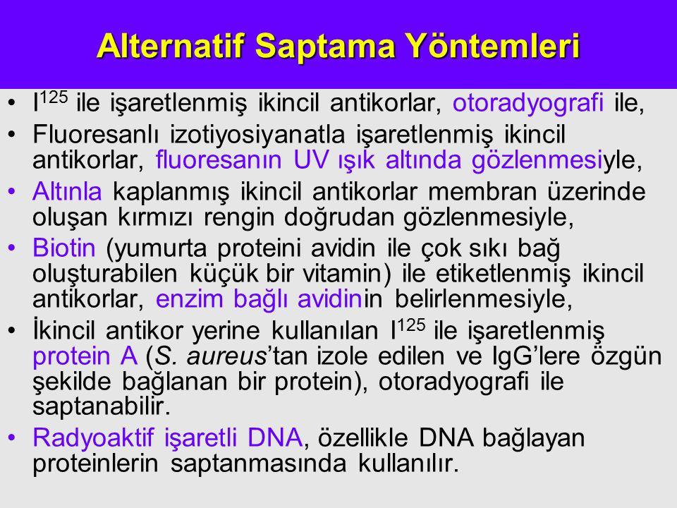 Alternatif Saptama Yöntemleri I 125 ile işaretlenmiş ikincil antikorlar, otoradyografi ile, Fluoresanlı izotiyosiyanatla işaretlenmiş ikincil antikorlar, fluoresanın UV ışık altında gözlenmesiyle, Altınla kaplanmış ikincil antikorlar membran üzerinde oluşan kırmızı rengin doğrudan gözlenmesiyle, Biotin (yumurta proteini avidin ile çok sıkı bağ oluşturabilen küçük bir vitamin) ile etiketlenmiş ikincil antikorlar, enzim bağlı avidinin belirlenmesiyle, İkincil antikor yerine kullanılan I 125 ile işaretlenmiş protein A (S.