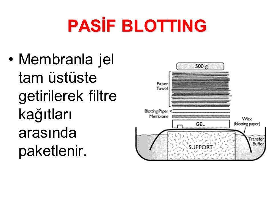 PASİF BLOTTING Membranla jel tam üstüste getirilerek filtre kağıtları arasında paketlenir.