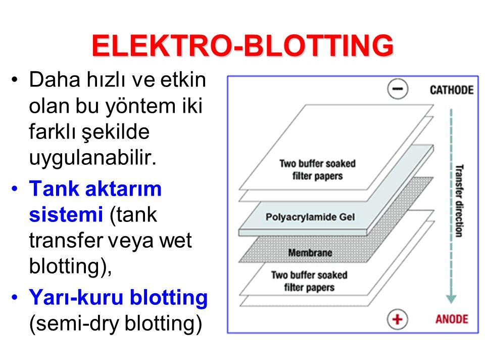 ELEKTRO-BLOTTING Daha hızlı ve etkin olan bu yöntem iki farklı şekilde uygulanabilir.