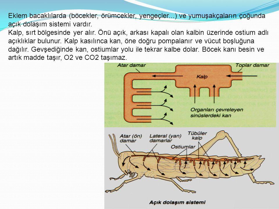 Eklem bacaklılarda (böcekler, örümcekler, yengeçler...) ve yumuşakçaların çoğunda açık dolaşım sistemi vardır.