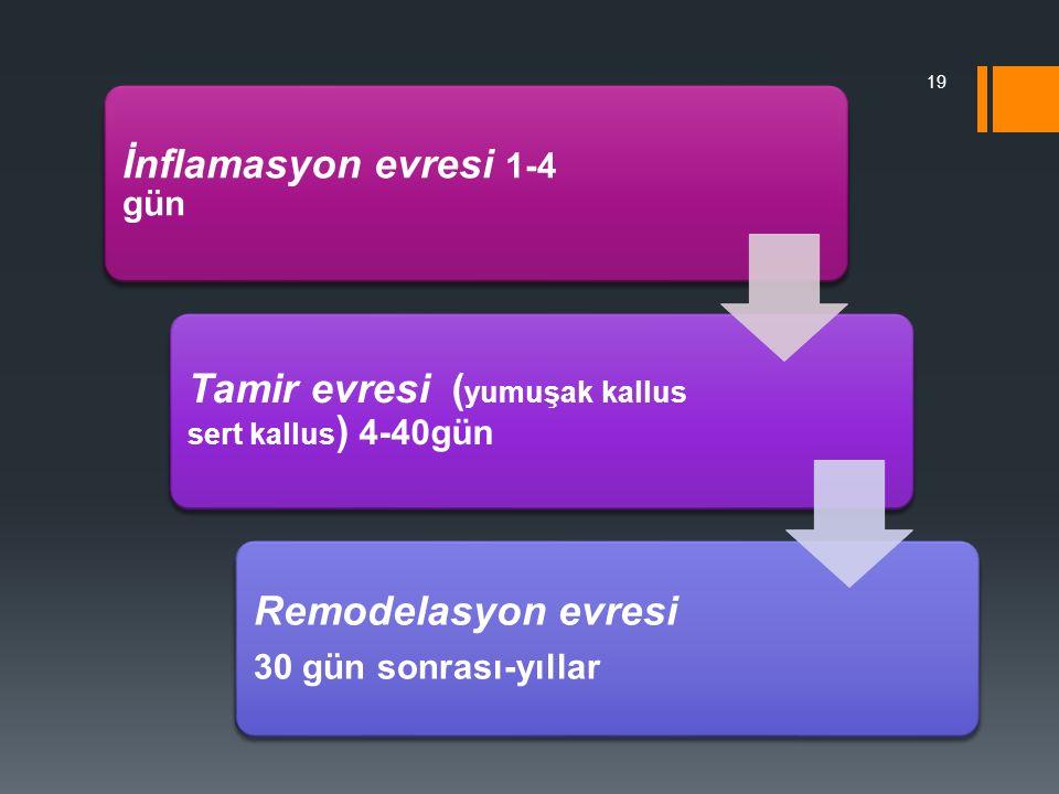 İnflamasyon evresi 1-4 gün Tamir evresi ( yumuşak kallus sert kallus ) 4-40gün Remodelasyon evresi 30 gün sonrası-yıllar 19