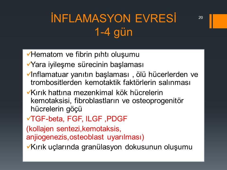 İNFLAMASYON EVRESİ 1-4 gün Hematom ve fibrin pıhtı oluşumu Yara iyileşme sürecinin başlaması Inflamatuar yanıtın başlaması, ölü hücerlerden ve trombos