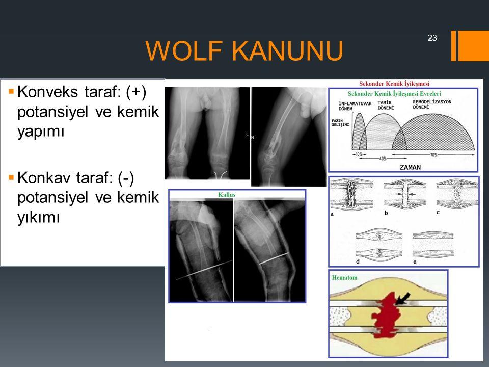 WOLF KANUNU  Konveks taraf: (+) potansiyel ve kemik yapımı  Konkav taraf: (-) potansiyel ve kemik yıkımı 23