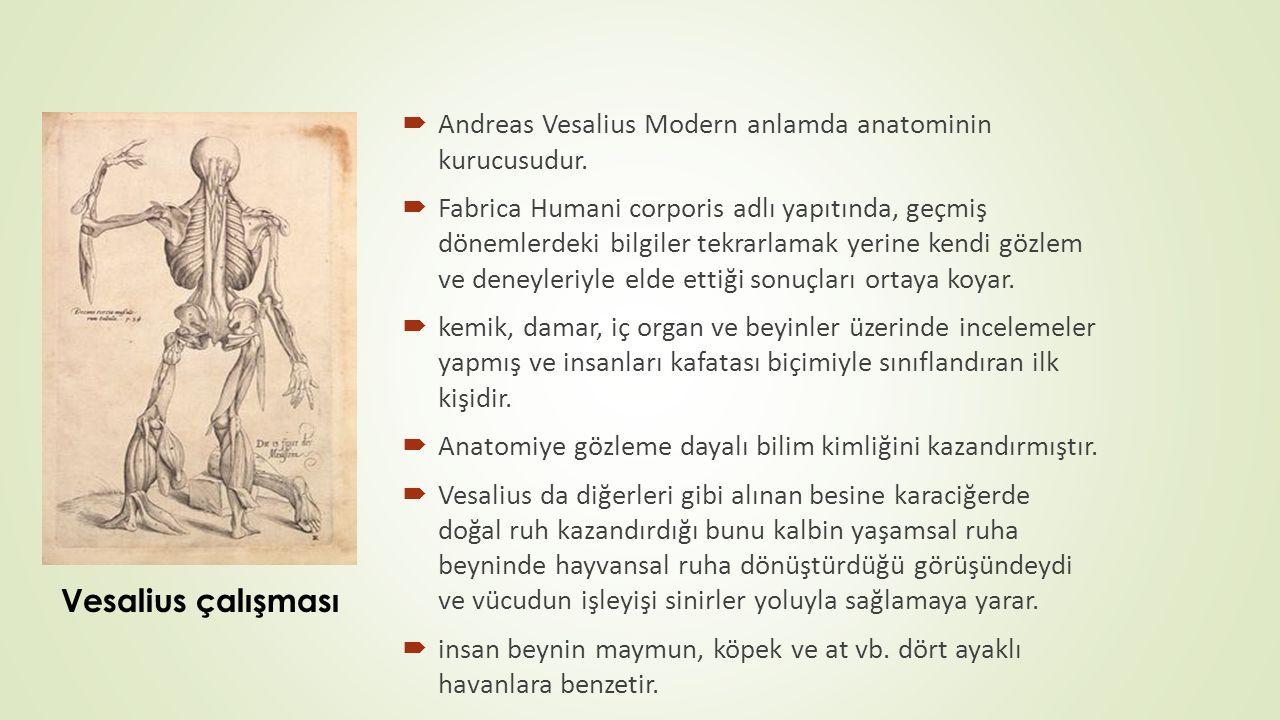  Andreas Vesalius Modern anlamda anatominin kurucusudur.  Fabrica Humani corporis adlı yapıtında, geçmiş dönemlerdeki bilgiler tekrarlamak yerine ke